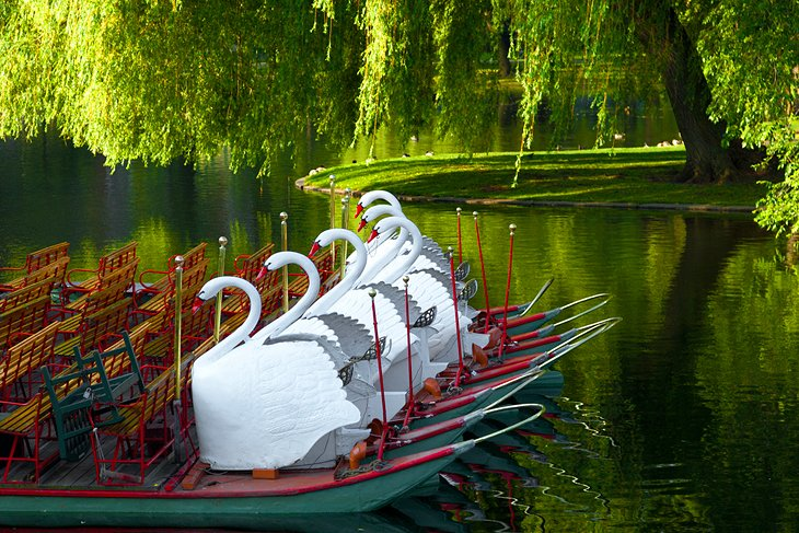 Boston Common and Public Garden Swan Boats